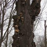 Дерево з мавками біля входу в центарльний корпус