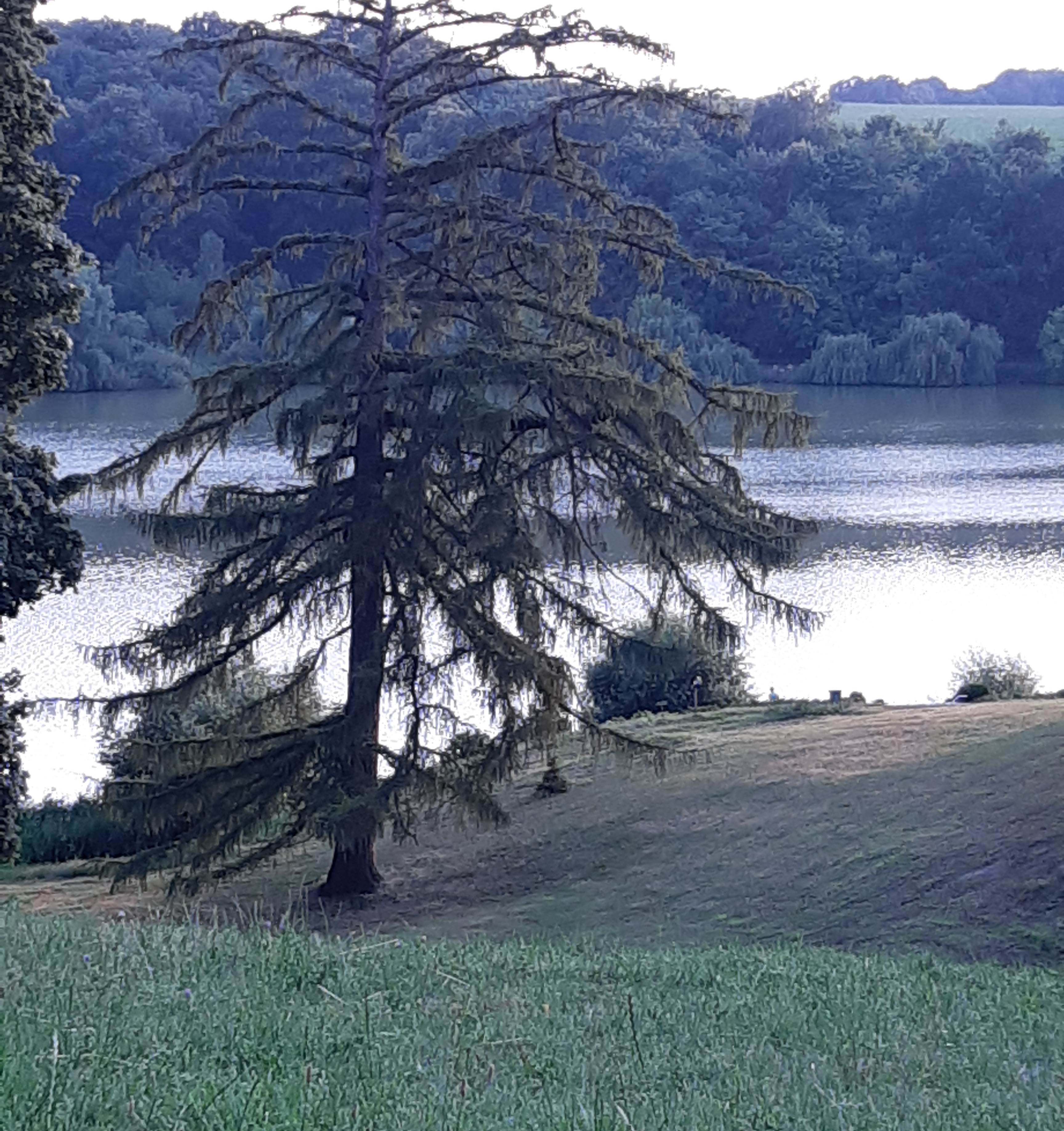 майорський ставок біля палацу